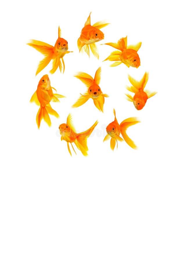 Drei Goldfishes lizenzfreies stockbild