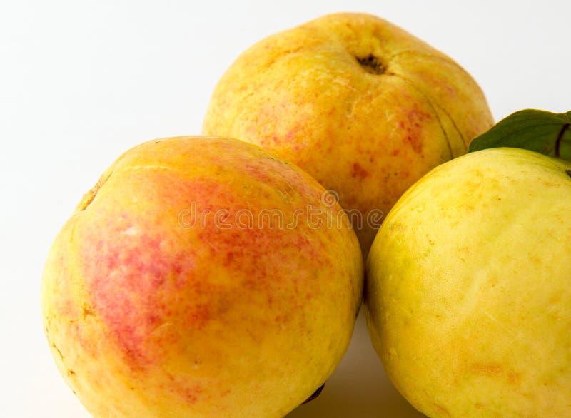 Drei Guajava-Früchte lokalisiert stockbild