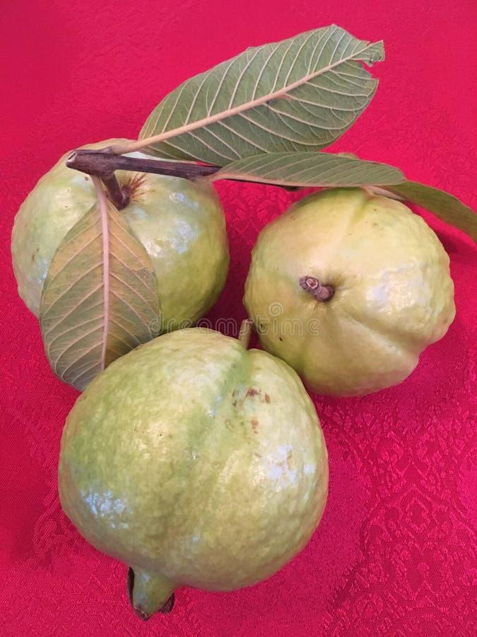Drei Guaven lizenzfreie stockfotos