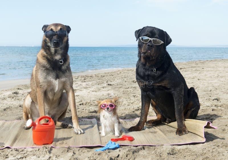 Drei Hunde auf dem Strand lizenzfreie stockbilder