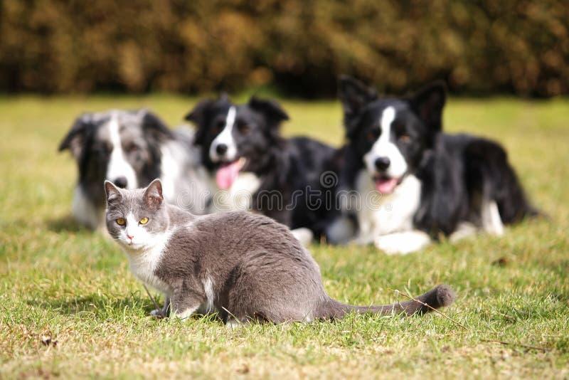 Drei Hunde, die in eine Katze anstarren stockbilder