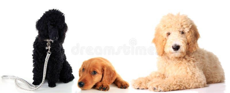 Drei Hunde zusammen lizenzfreies stockfoto