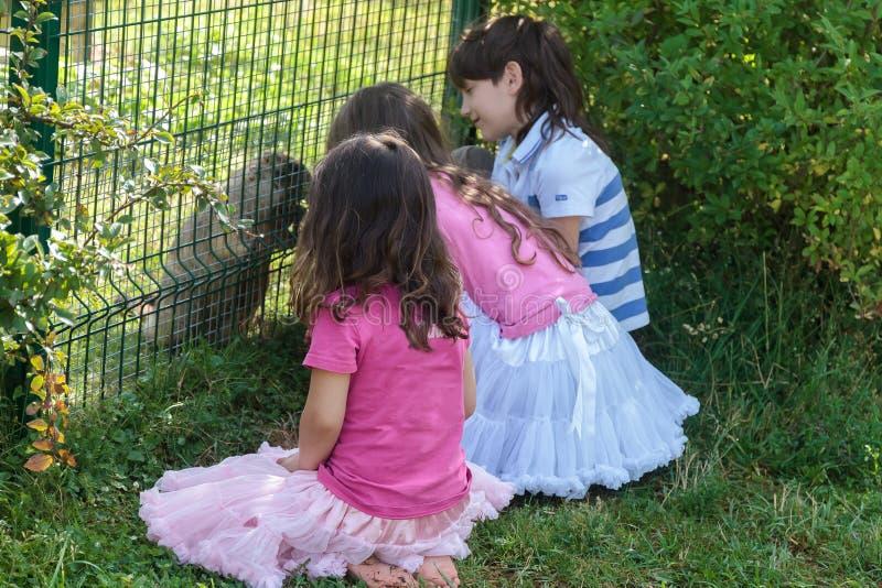 Drei junge entzückende Kinder, die Spaß in Zoo, a haben lizenzfreie stockbilder