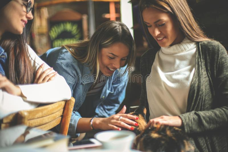 Drei junge Mädchen zu Hause mit Katzenhaustier lizenzfreies stockfoto