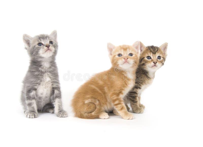 Drei Kätzchen auf einem weißen Hintergrund stockfoto