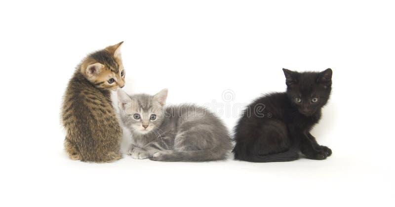 Drei Kätzchen auf Weiß stockfoto