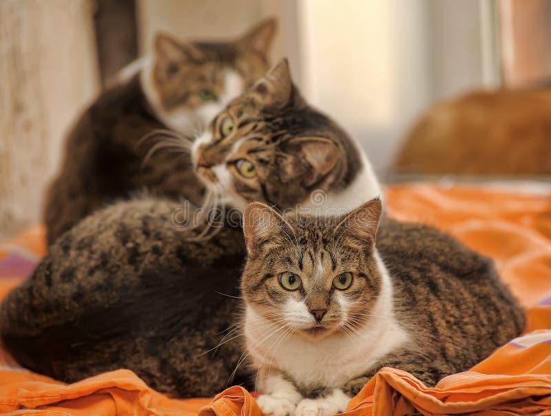 Drei Katzen lizenzfreies stockbild