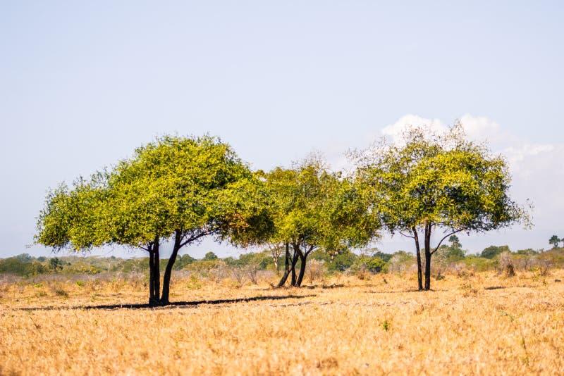 Drei kleine Bäume lizenzfreies stockfoto