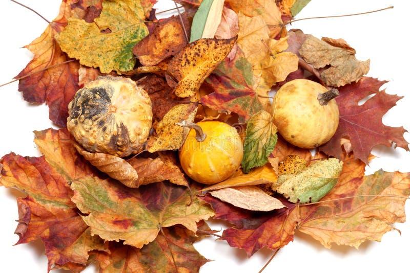 Drei kleine dekorative Kürbise auf Herbstblättern lizenzfreie stockfotografie
