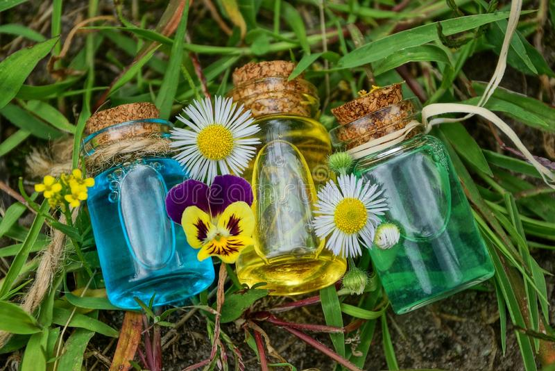 Drei kleine Glasflaschen mit Öl unter weißen Gänseblümchen liegen auf grünem Gras lizenzfreie stockfotografie