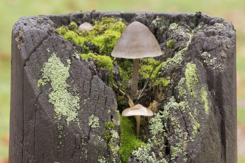 Drei kleine Pilze stockbilder