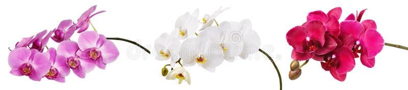 Drei lokalisierte Niederlassungen eines schönen blühenden empfindlichen Rosas, des Weiß und der Burgunder-Orchidee, eine gelbe Fa lizenzfreie stockfotos