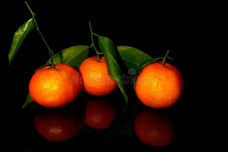 Drei Mandarinen mit Blättern, die auf schwarz isoliert sind, mit Reflexion lizenzfreie stockfotografie