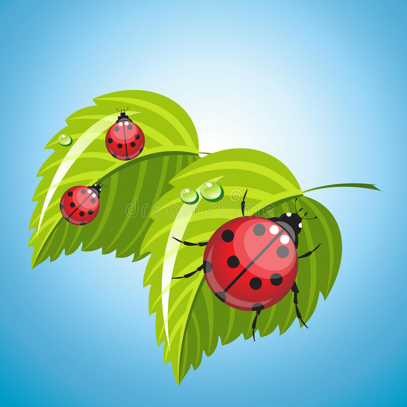 Drei Marienkäfer auf den grünen Blättern stock abbildung