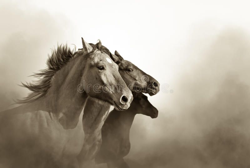 Drei Mustangpferde stockfoto
