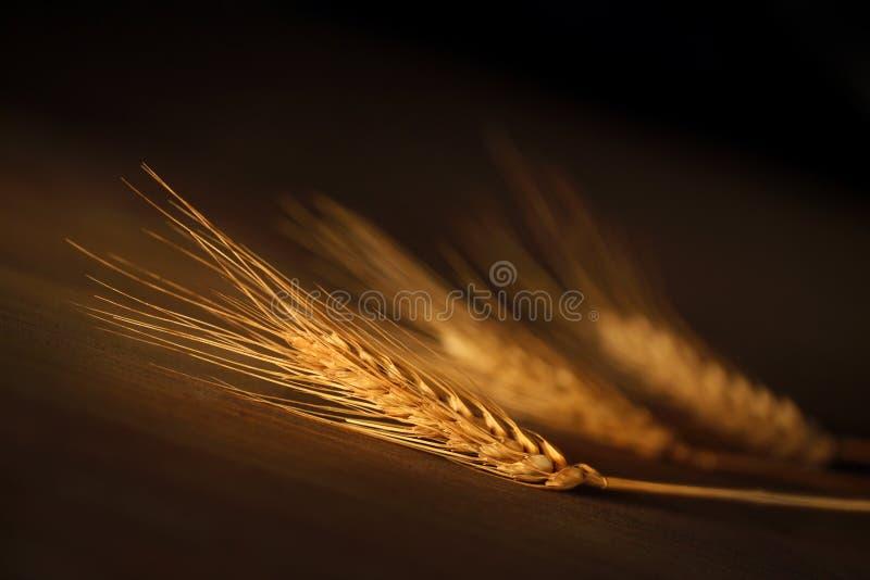 Drei Ohren Weizen stockfotografie