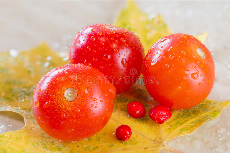 Drei perfekte Tomaten lizenzfreies stockbild