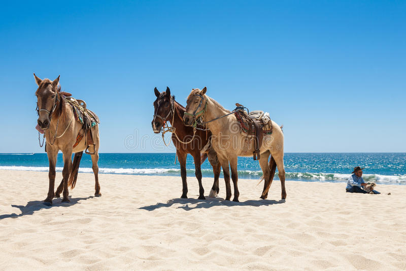 Drei Pferde auf einem Strand lizenzfreie stockfotos