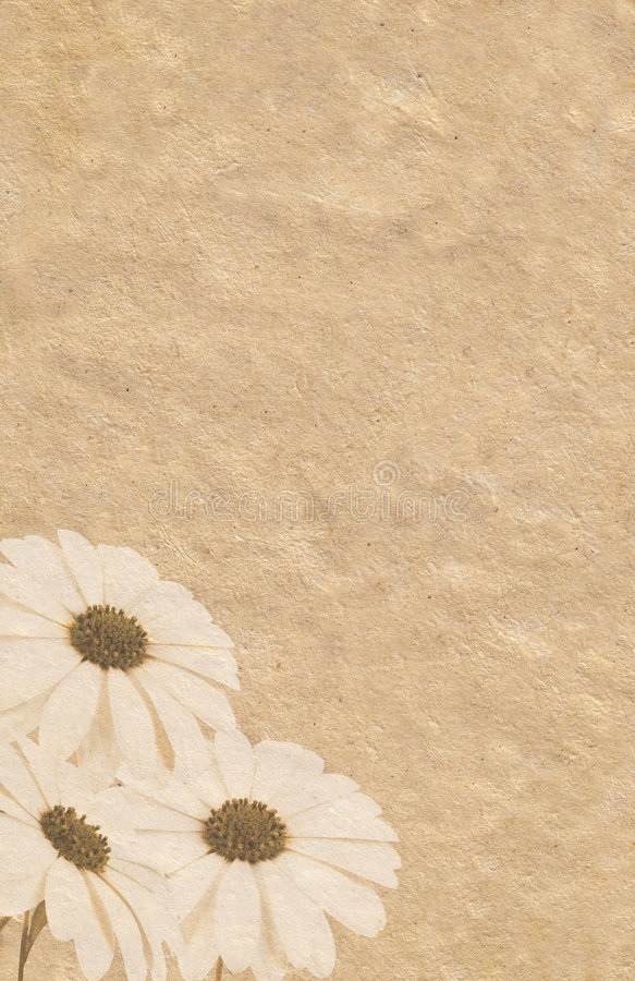 Drei Ringelblumen grunge Abbildung vektor abbildung