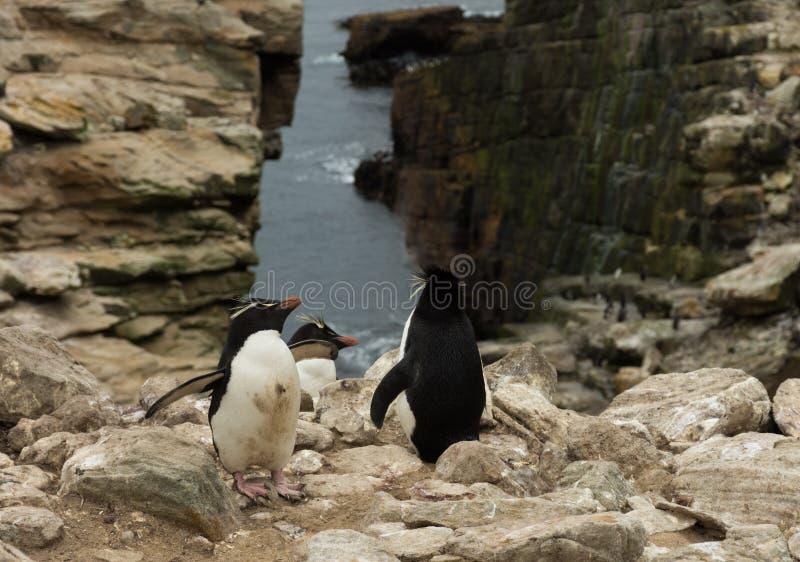 Drei Rockhopper-Pinguine an der Spitze einer Klippe lizenzfreie stockbilder