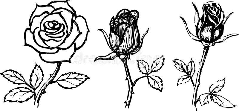 Zeichnen rose mit dornen VIDEO: Rose