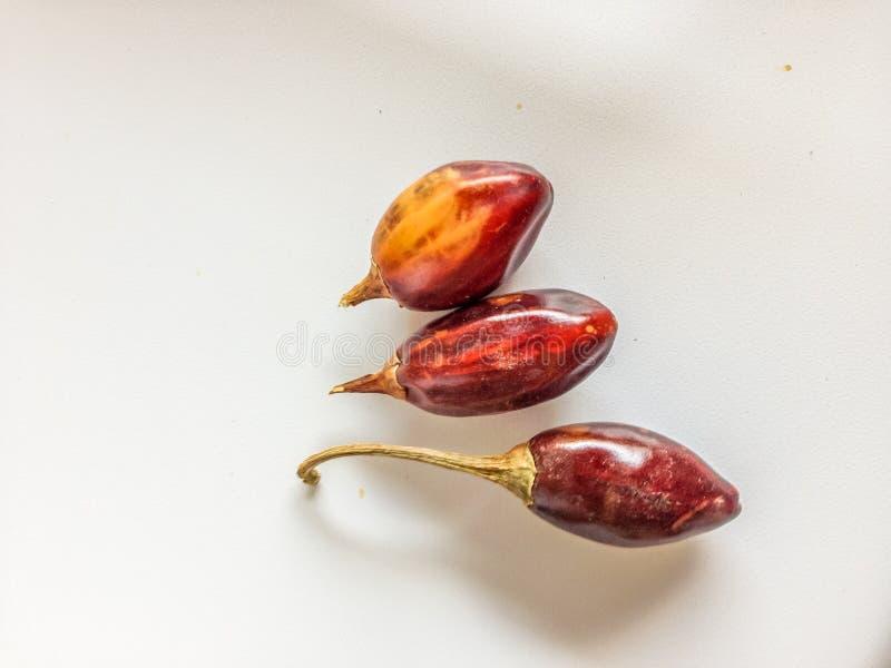 Drei rote cascabel Paprikas lizenzfreies stockbild