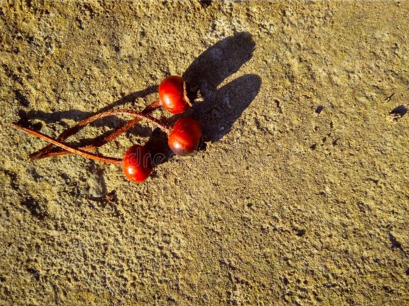 Drei rote trockene Hagebutten auf Beton stockfotografie