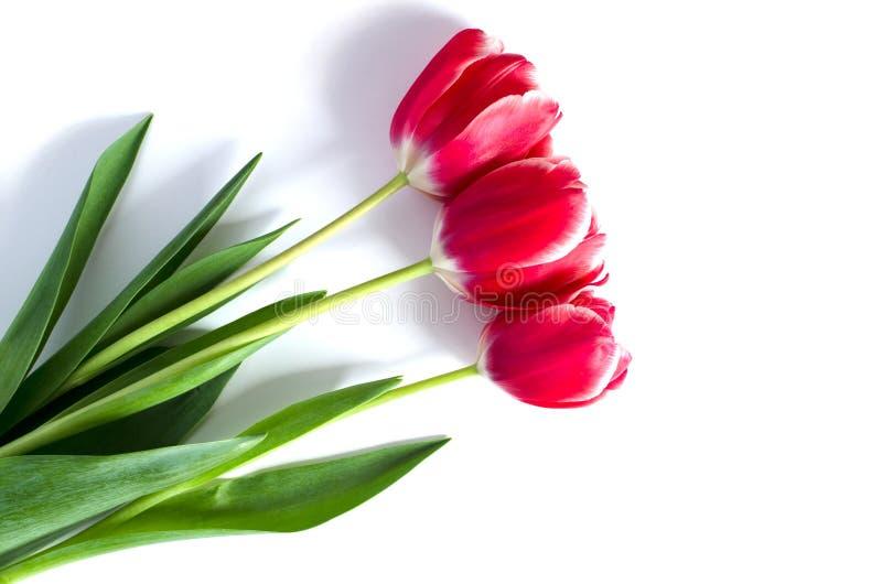 Drei rote Tulpen mit dem Schatten lokalisiert auf weißem Hintergrund lizenzfreies stockbild