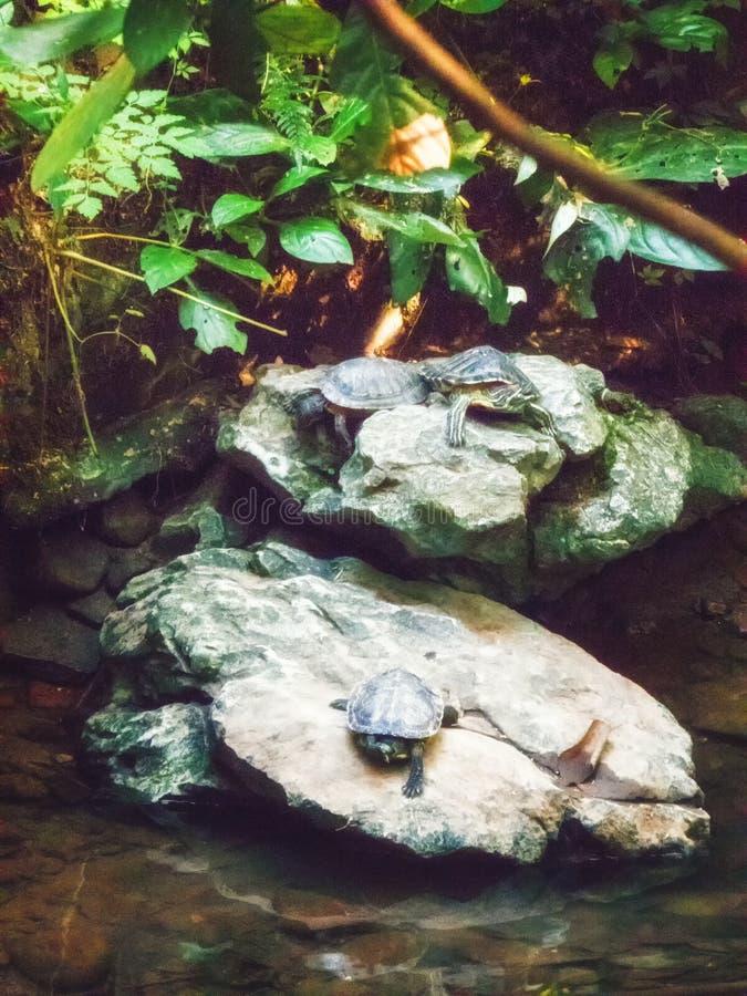 Drei Schildkröten stockfotografie