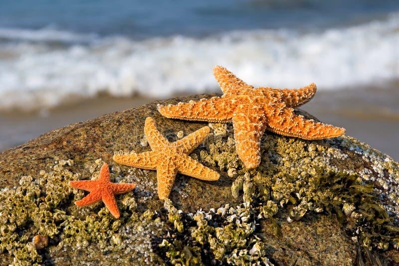 Drei Starfish stockfoto