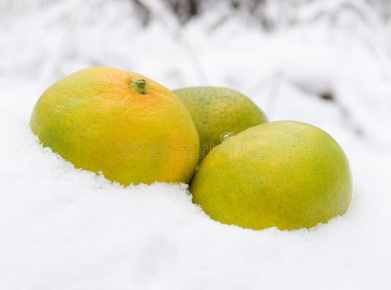 Drei Tangerinen auf Schnee lizenzfreie stockbilder