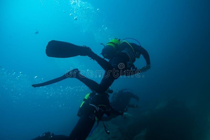 Drei Taucher in der Immersion stockfoto