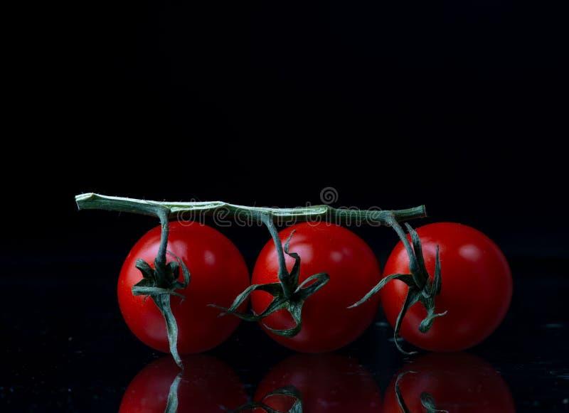 Drei Tomaten auf einem Zweig lizenzfreie stockbilder