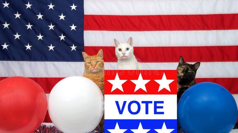 Drei verschiedene Katzen, die hinter Podium mit ABSTIMMUNGS-Plakat amerikanischer Flagge im Hintergrund sitzen stockfotografie