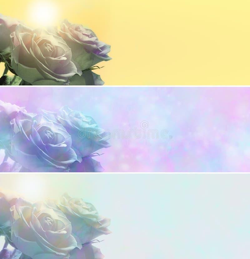 Drei verschiedene Rosen-Fahnen lizenzfreie stockbilder