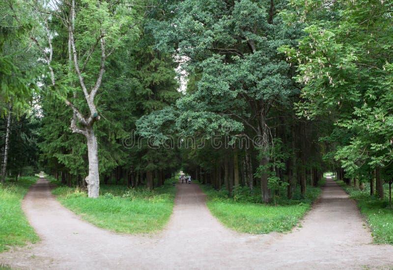 Drei Waldwege laufen in einen zusammen oder laufen Punkt von drei Möglichkeiten auseinander Gatchina, Russland lizenzfreies stockfoto