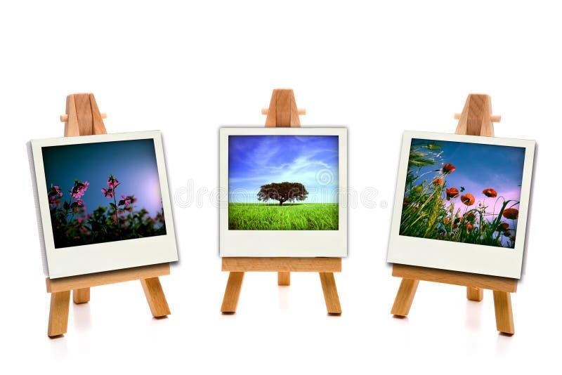 Drei weiße Malleinwand-Holdingfrühlingsfotos stockbilder