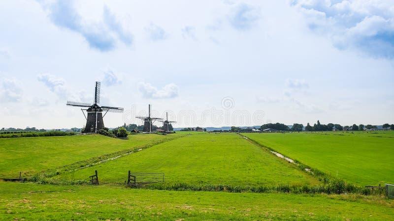 Drei Windmühlen des 17. Jahrhunderts auf einem Bauernhofgebiet in den Niederlanden lizenzfreie stockfotos