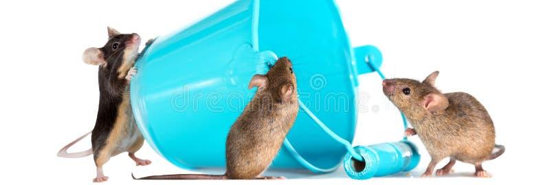 Drei wissbegierige Mäuse stockfotos