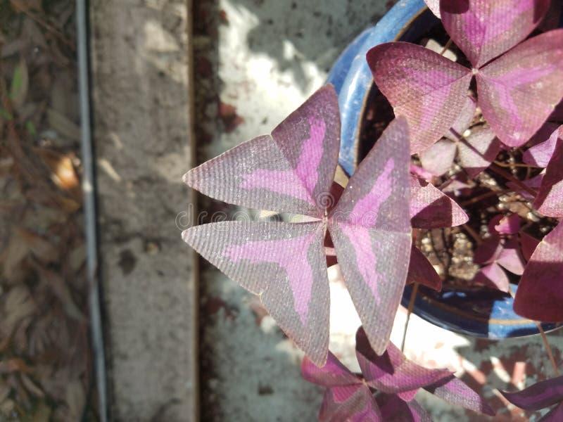 Dreieckblätter mit den akuten oder stumpfen Winkeln lizenzfreie stockfotos