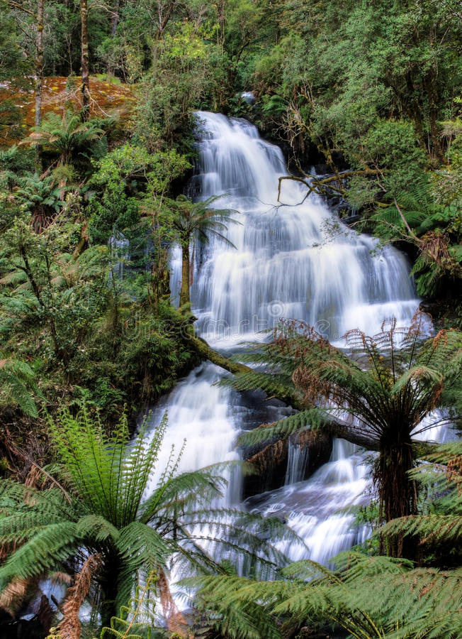 Dreiergruppe fällt, Otway Nationalpark, Australien lizenzfreie stockfotografie