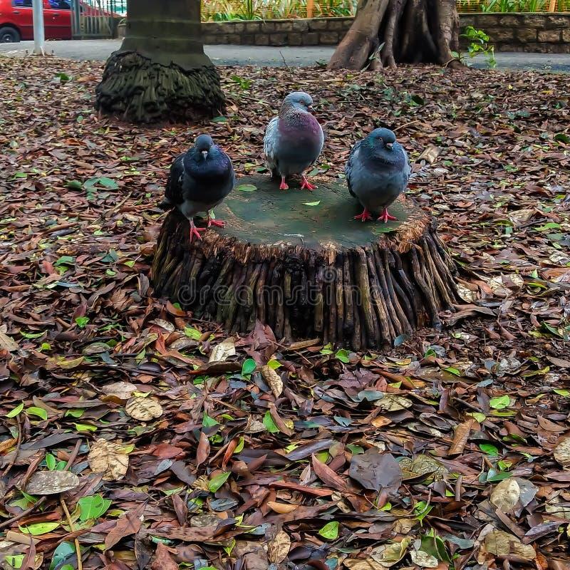Dreifacher Vogel lizenzfreie stockfotos