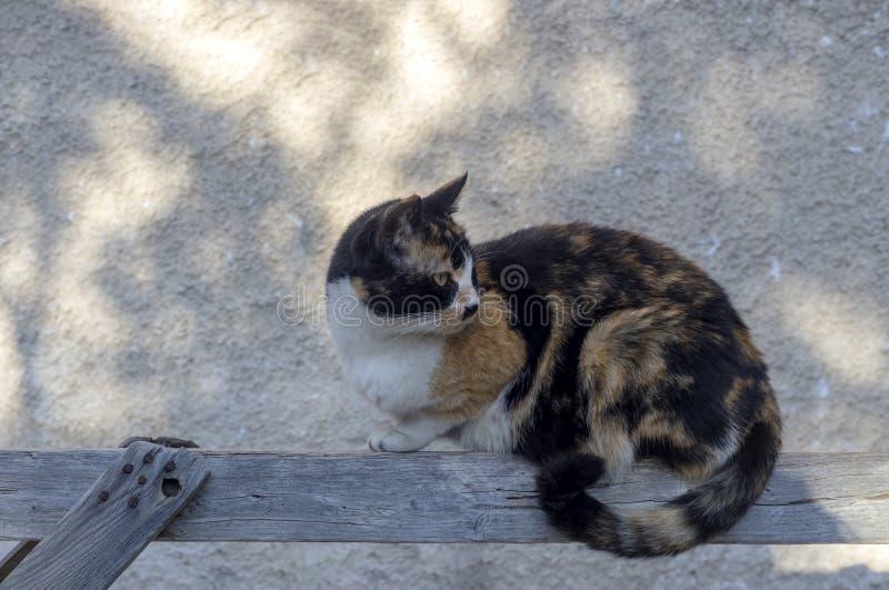 Dreifarbige Katze mit grünen Augen dicht lizenzfreie stockbilder