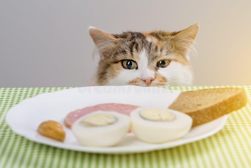 Download Dreifarbige Katze Stiehlt Wurst Von Der Tabelle Stockfoto - Bild von neugier, nahrung: 106802684