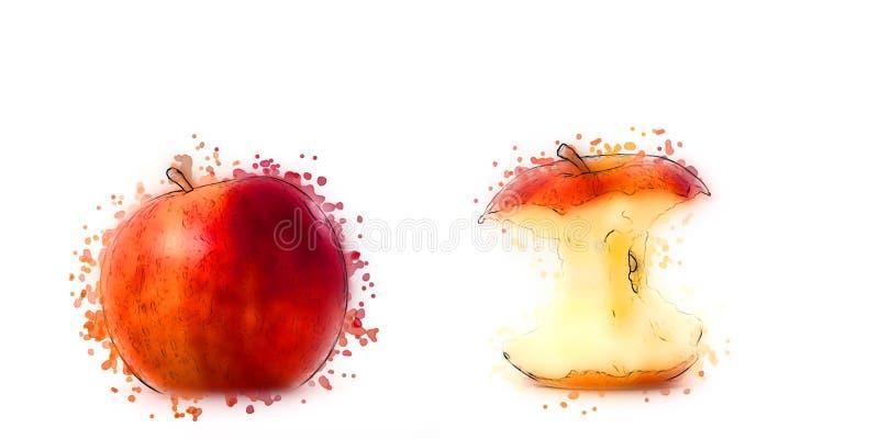 Drenaje del estilo de la acuarela dos manzanas fotos de archivo