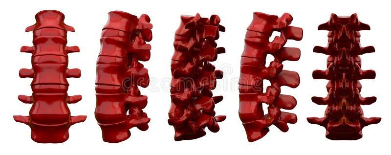 3drendering椎骨的例证 库存例证