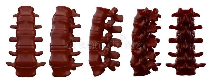 3drendering椎骨的例证 皇族释放例证