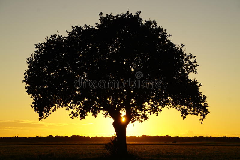 Drenthe. Beautiful sunset close to Dwingeloo, Drenthe, the Netherlands royalty free stock photos