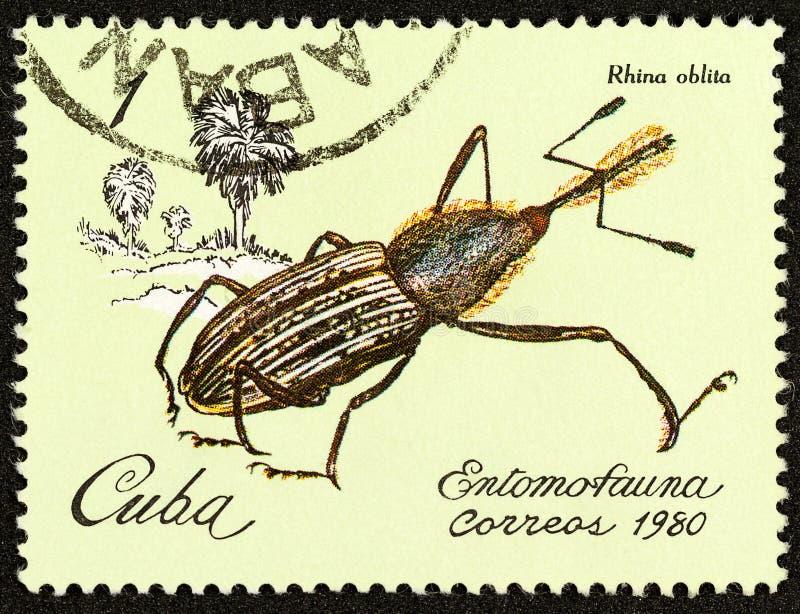 Rhina Germany