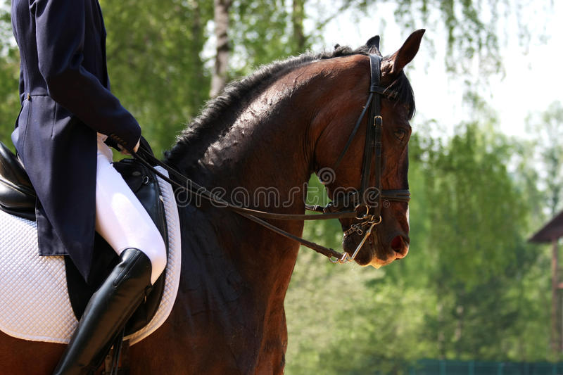 Download Dressage stock photo. Image of glove, harness, mane, equestrian - 18175086